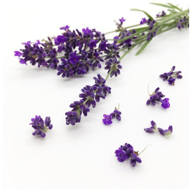 Jambalaya Lavendel Duftsäckchen
