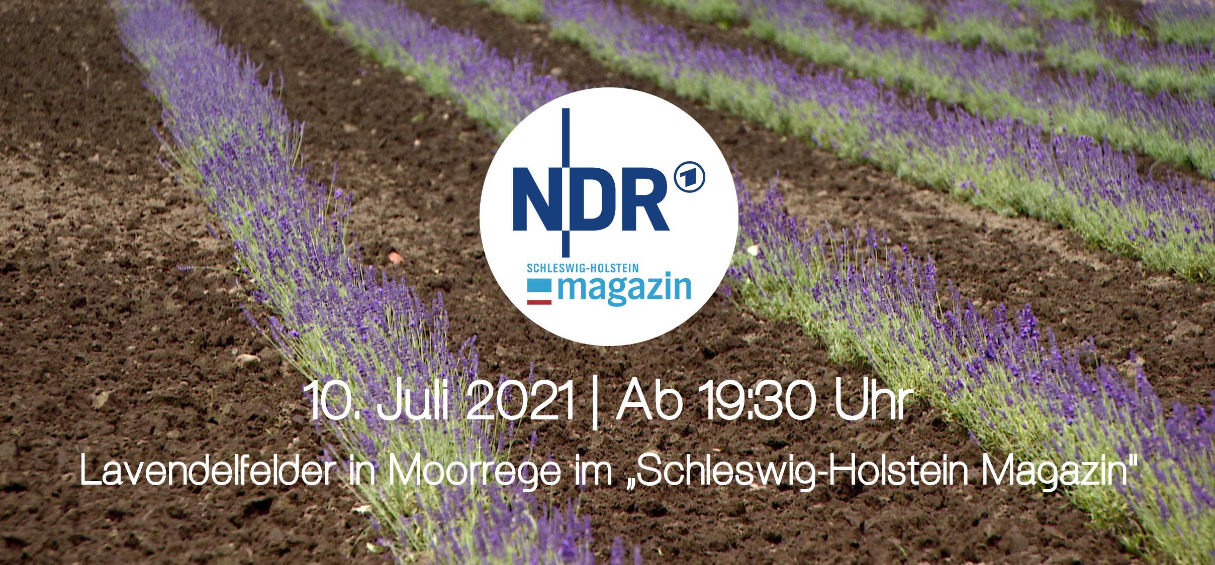 Read more about the article Lavendelfelder im NDR Schleswig-Holstein Magazin