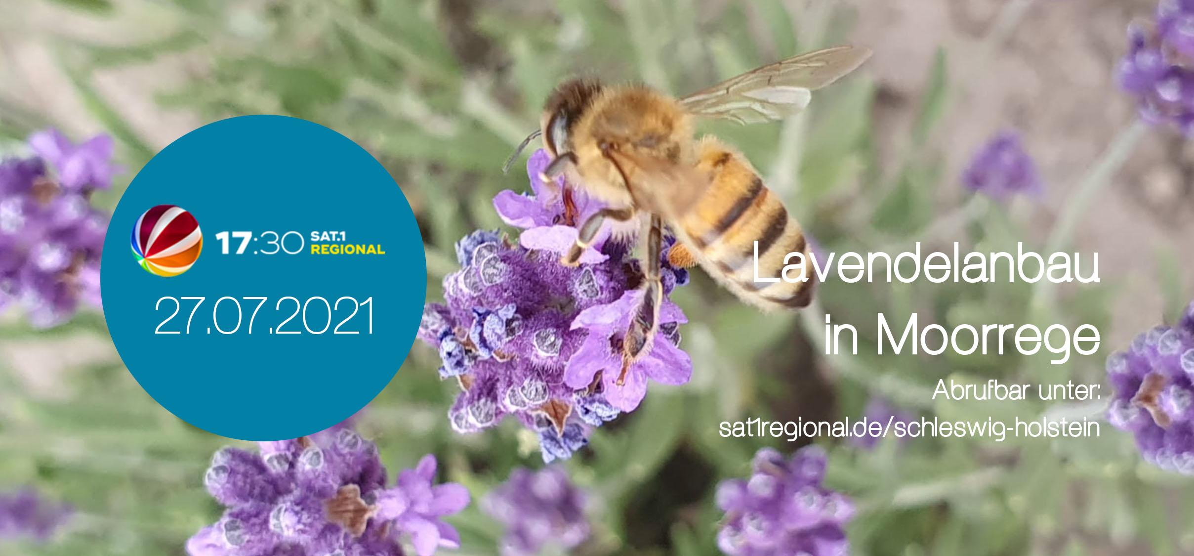 Read more about the article Jambalaya Lavendelanbau bei SAT.1 Regional